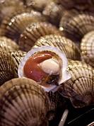 Marknad I Honkong, Fresh Snails At Market Stall