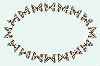 The Oval Frame Of A Butterfly
