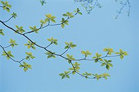 Leaves And Blue Sky (thumbnail)