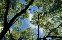Blue Sky Through Leaves