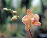 Foto: Thomas Carlgren/ SCANPIX Code 65125 Orkidž, Close_Up Of Orchid Flower
