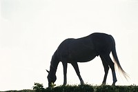 The Silhouette Of A Horse