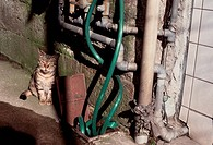 Cat Near Water Pipes