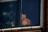 A Cat By The Window