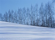 Biei In Winter