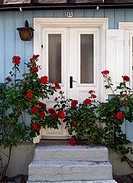 Trappa och vit ytterdörr med röda rosbuskar, Visby, Gotland, Close_Up Of Front Door Steps And White Closed Door Covered With Red Roses.