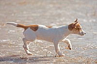 half breed dog puppy on frozen lake restrictions: animal guidebooks, calendars