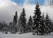 Wintry forest, Bavaria, Germany