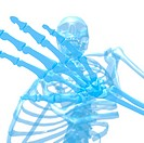 Human skeleton. Computer artwork of a human skeleton, with a close_up of its hand. The skull upper centre and rib cage centre and lower centre can als...