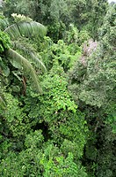 Tropical rainforest canopy. This rainforest is part of the Tiputini Biodiversity Station in Quito, Ecuador.
