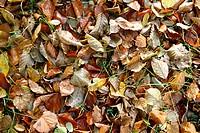 Autumncolours