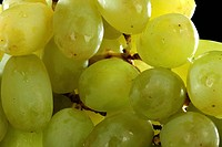 Yellow wet grapes with drops of water