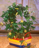 citrus_yellow passion flower