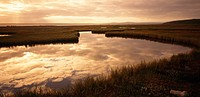 Clouds reflected in the water of the Cape Geelbek salt marsh at sunrise. West Coast National Park, Western Cape Province, South Africa