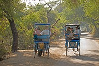 WILDLIFE TOURISTS being taken around Keoladeo National Park by guides pedal cycling rickshaws, Bharatpur, Rajasthan, India