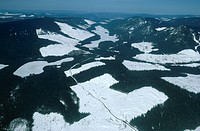 CLEAR CUT CEDAR FOREST aerial view. Cariboo Mountains. British Columbia, SW Canada