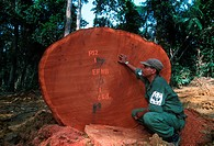 WWF International staff monitoring logging operations in Gabon