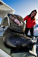 CAPE FUR SEAL Arctocephalus pusillus on boat with tourist. Namibia