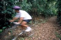Cyclist, Tijuca Forest, Rio de Janeiro, Brazil