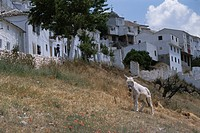 An Animal And Rows Of Houses In Spain
