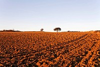 A ploughed field at sunset, Lower Austria, Austria