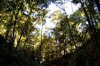 Forest, Landscape, Palmas, Tocantins, Brazil
