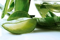 Pieces of Aloe Vera plant