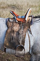 Well-used Mongolian saddle on horse, north central Mongolia