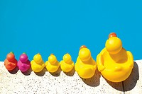 Rubber duckies lined up along the edge of a swimming pool