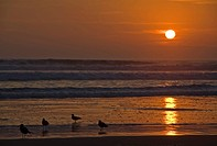 Sunset with sea gulls at the beach from Arica, Pacific, North of Chile, South America