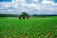 Agriculture _ Chemical application, a John Deere high clearance sprayer applying Roundup Ultra Max to early growth Roundup Ready soybeans / TN.