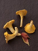 Four chanterelles on a black background