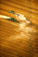 Agriculture _ Aerial view of two combines harvesting wheat in late Summer, in bright late afternoon sunlight / Canada _ Manitoba, nr. Dugald