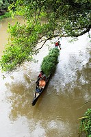 Transporting grass by a small boat near Mannarsala , Kerala , India.