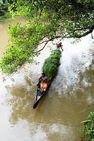 Transporting grass by a small boat near Mannarsala , Kerala , India.