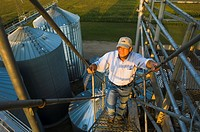 Agriculture _ A farmer climbs the ladder on the top of a grain elevator in late afternoon light with a mid growth corn field in the background / near ...