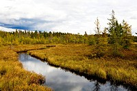 Bog near Milton, Nova Scotia, Canada