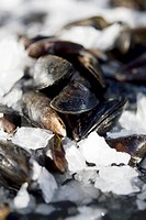 Mussels on crushed ice
