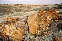 Eroded sandstone boulders exposed in semi_arid landscape at dawn, Seven Persons, Alberta, Canada