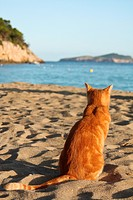 domestic cat at the beach