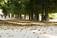 France, Paris, people in tree-lined park
