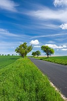 Spring landscape with road near Trstenice, Znojmo district, South Moravia, Czech Republic, Europe