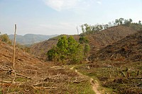 Environmental damage, deforestation in the highlands, Xieng Khuang Province, Laos, Southeast Asia