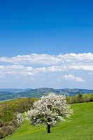 Spring landscape in Planavy, Bile Karpaty, White Carpathian mountains protected landscape area, Moravia, Czech Republic, Europe
