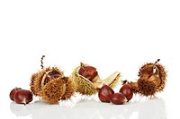 Chestnuts (Castanea)