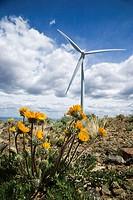 Wind turbine on ridge with yellow wildflowers