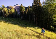 Female hiker on the Gold Basin trail in the La Sal mountains with Mount Tukuhnikivatz in the background near Moab, Utah