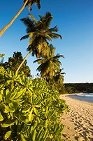 Palms at Anse Takamaka beach, Mahe island, Seychelles