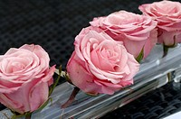 Damask rose roses (thumbnail)