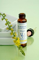 Homeopathic remedies: Agrimony (thumbnail)